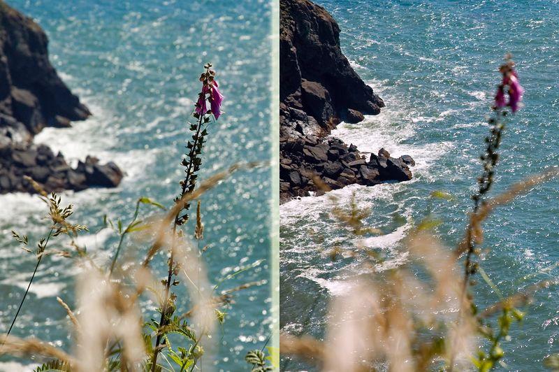 ND70_2005-07-15DSC_1781-OceanView-PurpleFlower-nice-collage-1782-2 copy