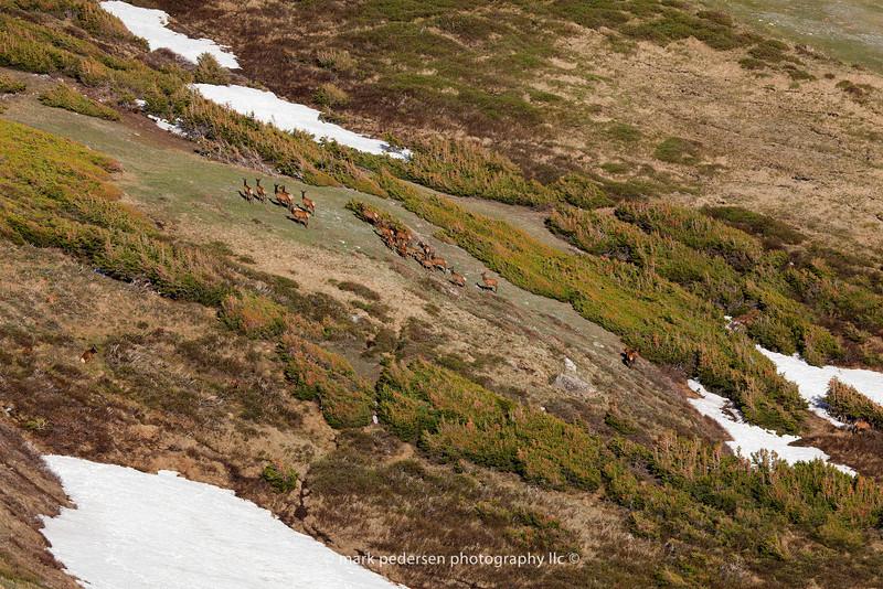 Elk | RMNP