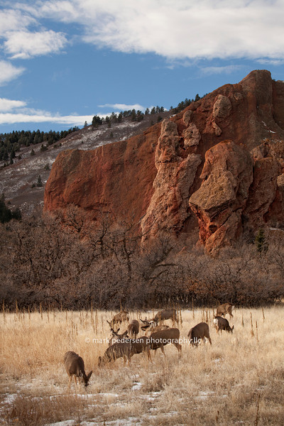Deer at Roxborough State Park