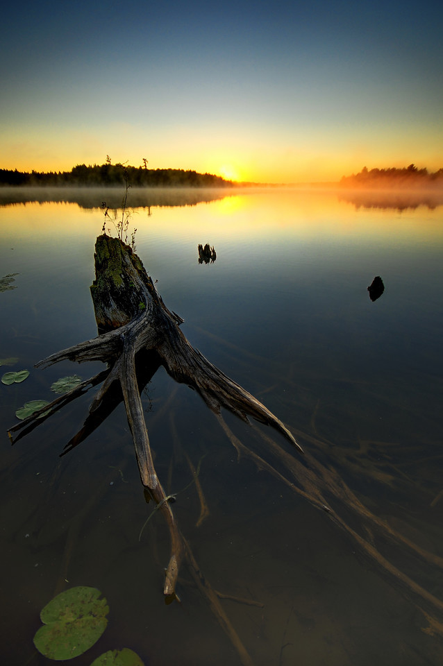 Partially submerged stump in Big Lake, Wisconsin.