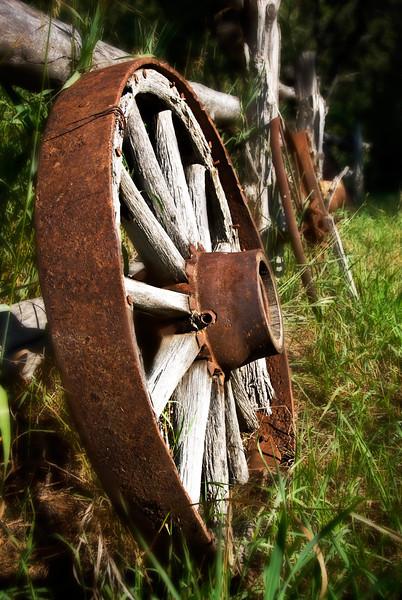 Begon Wagon Wheel