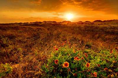 Sunrise over the Texas coastal prairie near Port Bolivar, Texas.