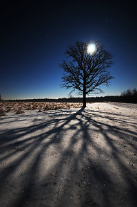 A moon lit oak in the countryside of Portage County, Wisconsin.