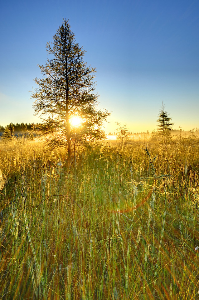 Bog at sunrise, Wisconsin.