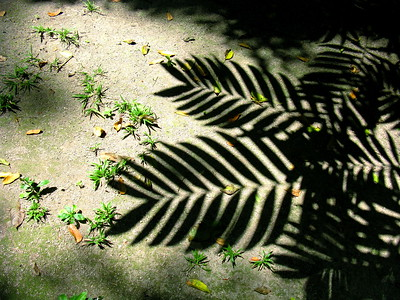 Shadow of palm leaves, Tikal Ruins, Guatemala.
