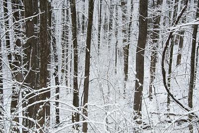 snow030316lg-8318-2