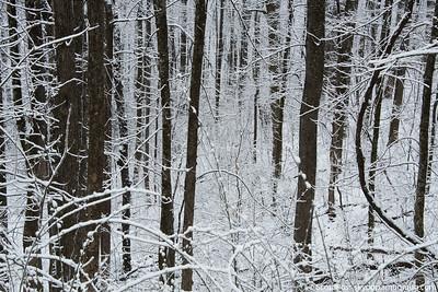 snow030316lg-8318