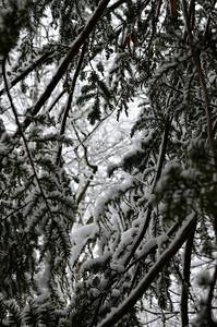 snow021114a-14756