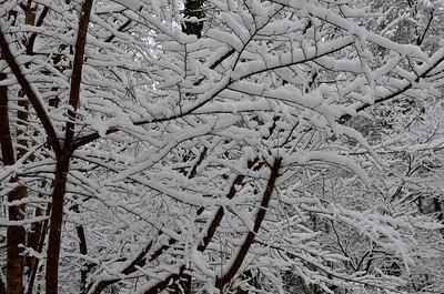snow021114a-14748