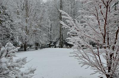 snow021114a-14773
