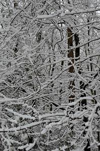 snow021114a-14755