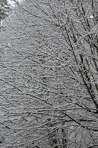 snow021114a-14768