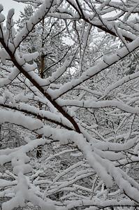 snow021114a-14752