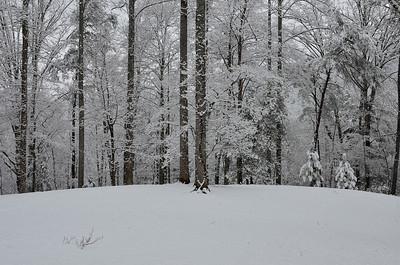 snow021114a-14761