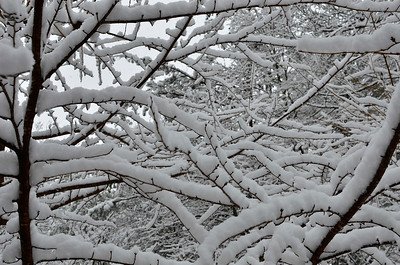 snow021114a-14749