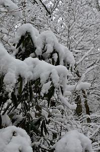 snow021114a-14758