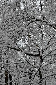 snow021114a-14754