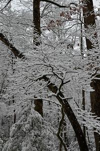 snow021114a-14753