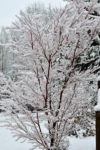 snow021114a-14772
