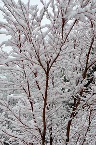 snow021114a-14770