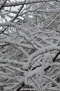 snow021114a-14751