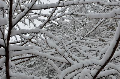 snow021114a-14750
