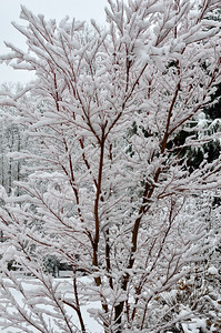 snow021114a-14771
