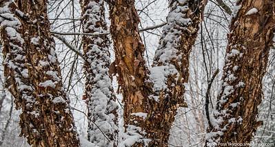 snownorthridge012216lg-7188-2