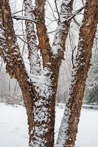 snownorthridge012216lg-7185