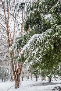 snownorthridge012216lg-7197