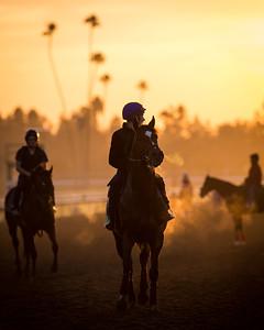 Toronado gallops at Santa Anita 10.30.14