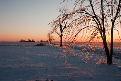 Ice covers a tree and the ground at sunrise