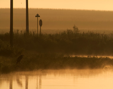 fog hangs over the water at sunrise