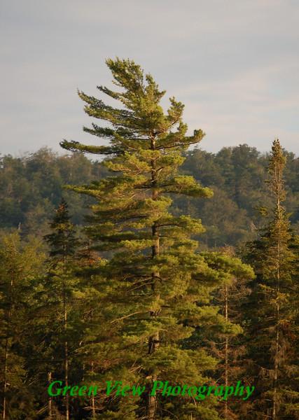 Twitchell Lake, Adirondacks