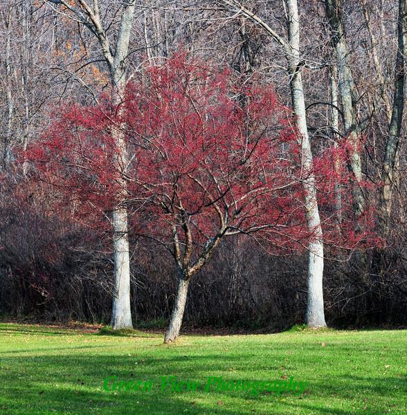 Framed autumn tree
