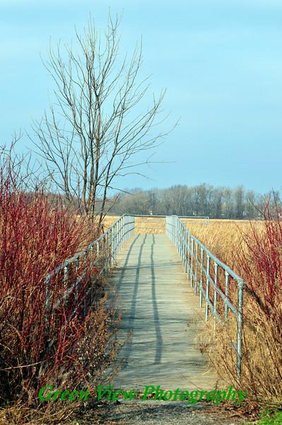 Path to Braddocks Bay