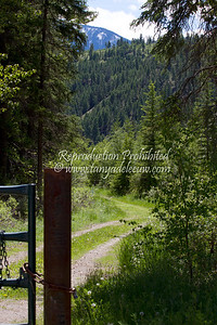 The trail beside Toby Creek near Invermere, BC. June 2012