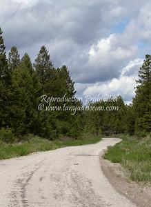 Westroc Ind Ltd Haul Road near Invermere, BC, Canada. June 2012