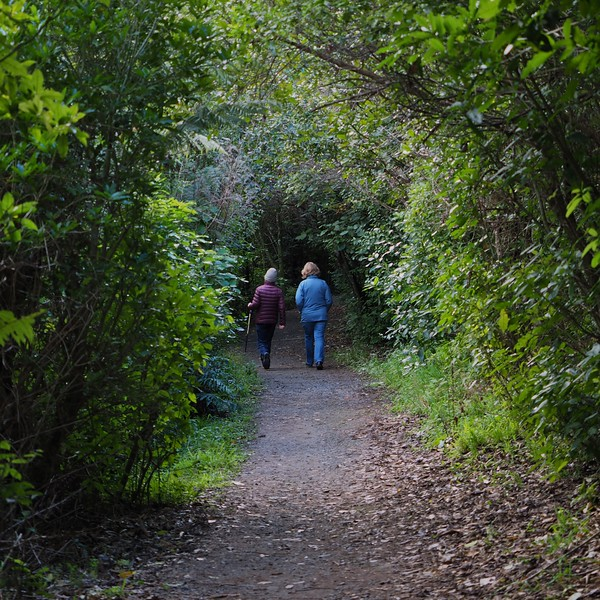 Otari-Wilton Bush walkers