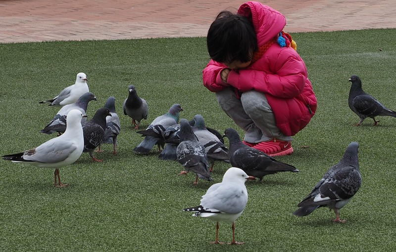 Child feeding birds