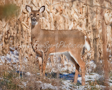 Deer1_01 13 2010_esp-4893