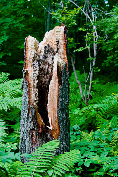 <center>Hollow Stump    <br><br>World's End - Hingham, MA</center>