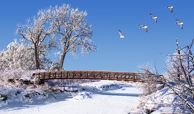 Winter Geese Over Wooden Bridge