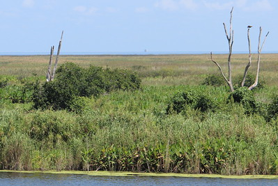 Lake Okeechobee wetlands