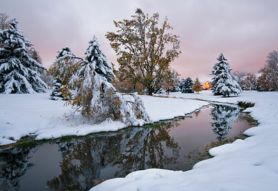 Reflected Snow