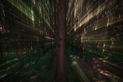 Roundwyck Copse woods, Plaistow, Sussex. June 02, 2019. Photo: Edmond Terakopian