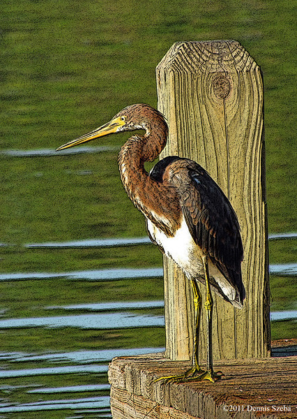 Painterly effect used on a Heron. 2011.