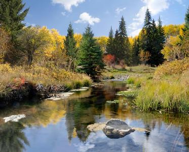 Reflections of Fall in a Quiet Stream