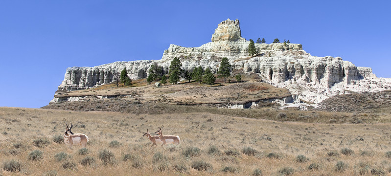 Capitol Rock Where The Pronghorns (antelope) Play