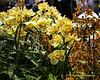 2017 Philadelphia Flower Show